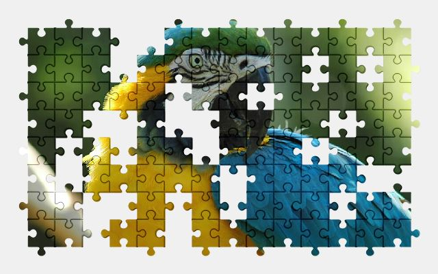 free jigsaw puzzle online macaw,bird,animal,parrot
