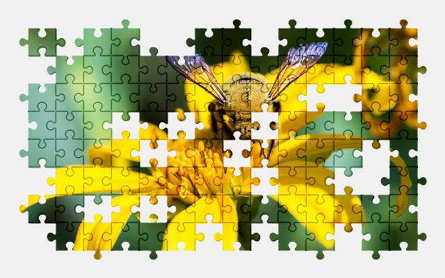 free jigsaw puzzle online africa,yellow,flower,nature