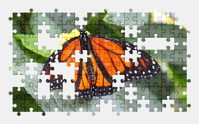free jigsaw puzzle online butterfly,plant,nature