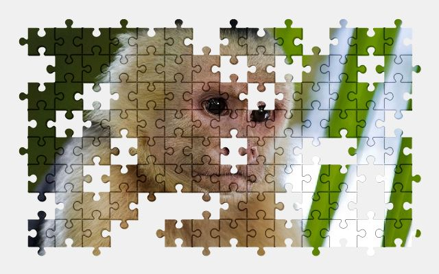free jigsaw puzzle online monkey,primate,animal,nature