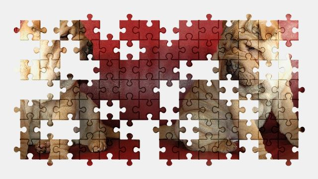 free jigsaw puzzle online dog,puppy,pet,animal