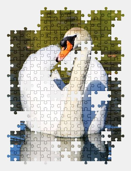 free jigsaw puzzle online swan,water,bird,white,nature
