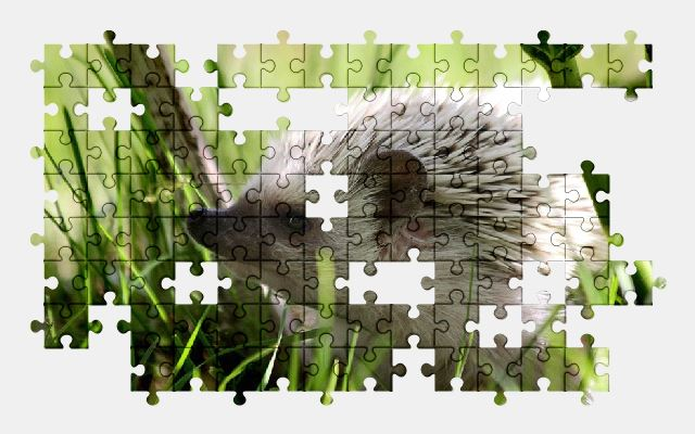 free jigsaw puzzle online nature,hedgehog,cute,animal