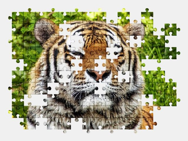 free jigsaw puzzle online nature,tiger,animal,cat,big-cat