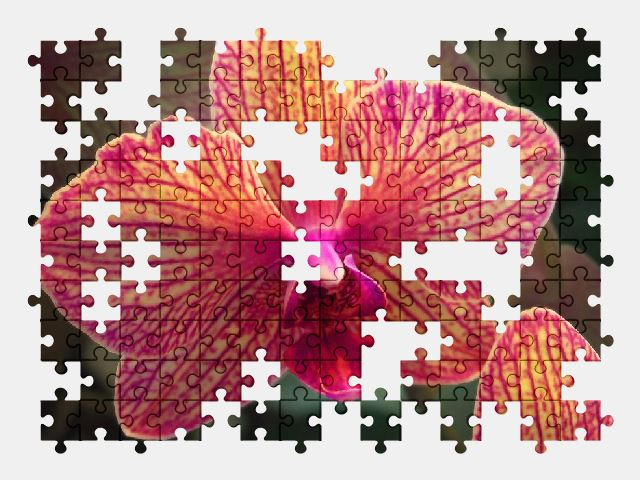 free jigsaw puzzle online orchid,flower,plant,beauty