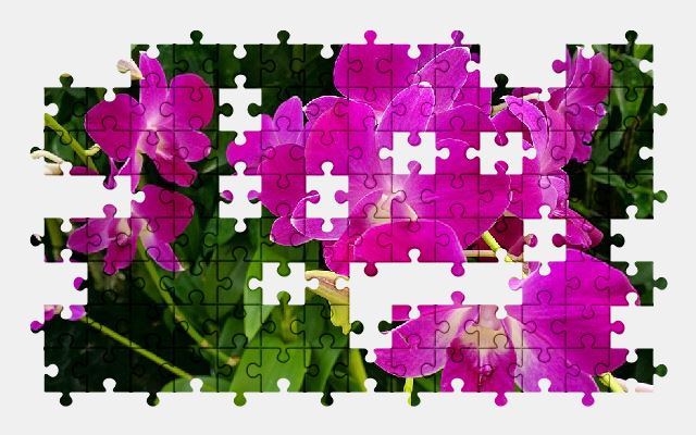 free jigsaw puzzle online orchid,flower,plant,pink,nature