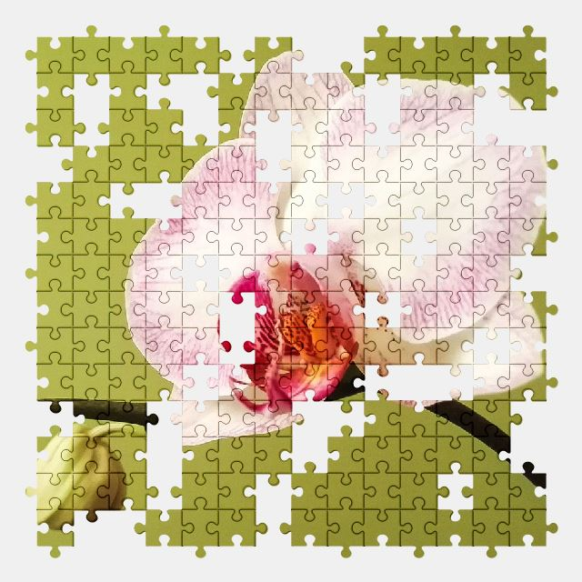 free jigsaw puzzle online orchid,blossom,bloom,pink,flower,nature