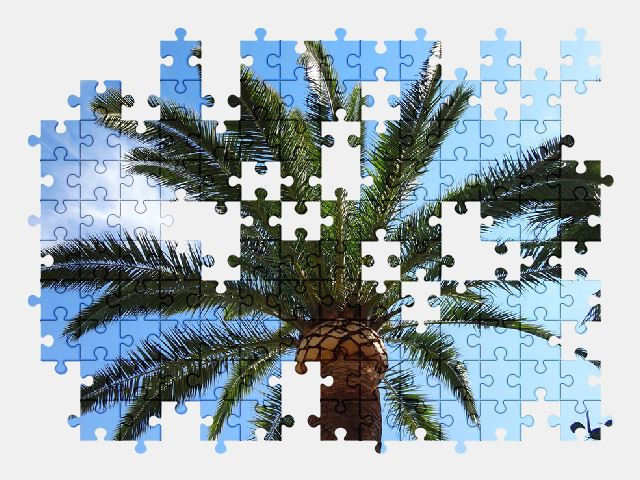 free jigsaw puzzle online palm-tree,sky,palm,landscape,relax,nature