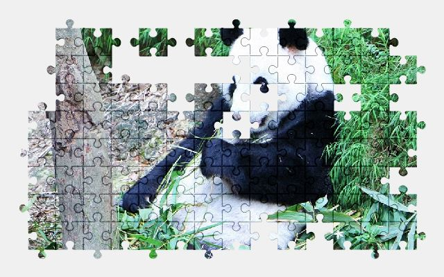 free jigsaw puzzle online panda,bear,chinese,animal,cute