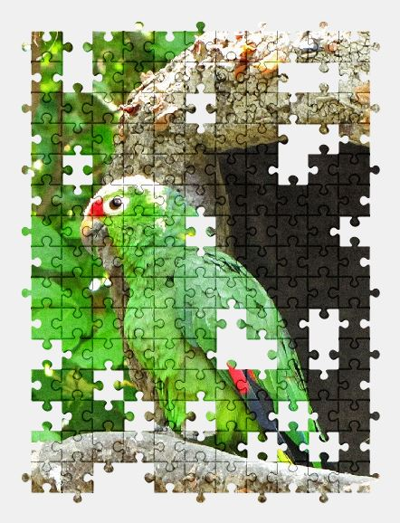 free jigsaw puzzle online parrot,zoo,bird