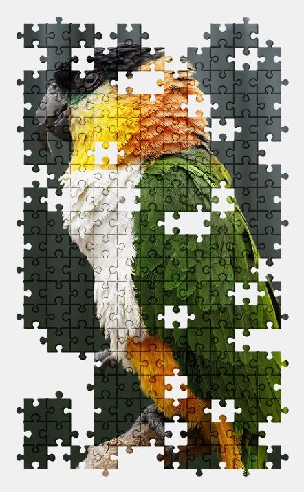 free jigsaw puzzle online parrot,bird,animal,zoo,nature