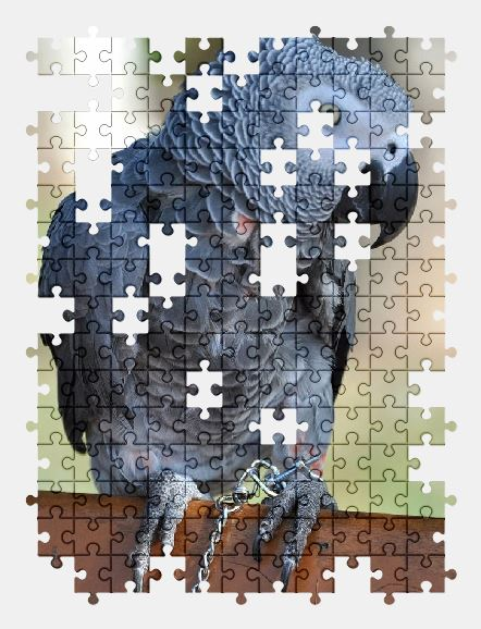 free jigsaw puzzle online parrot,bird,animal,nature