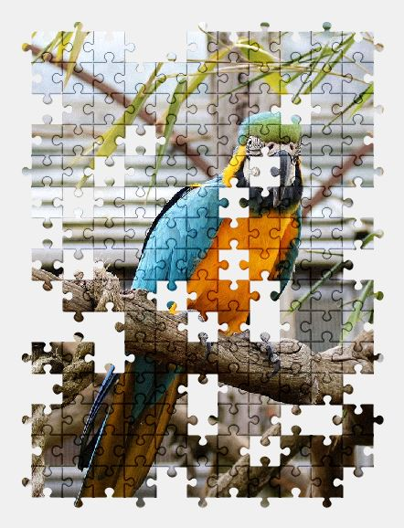 free jigsaw puzzle online parrot,macaw,bird,nature,colorful,tropical,wild