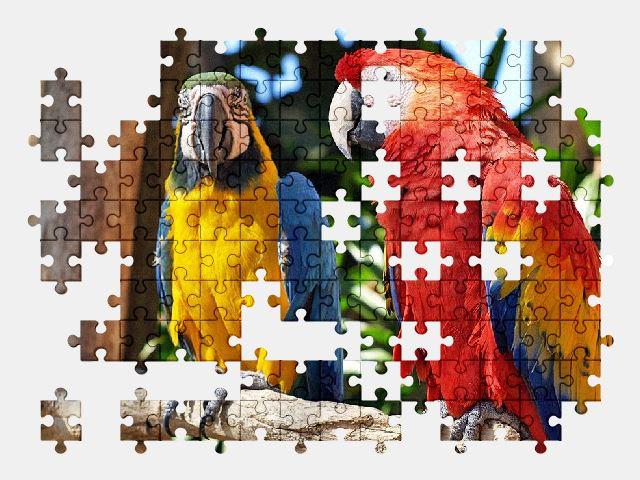 free jigsaw puzzle online parrot,colorful,nature,bird,birds