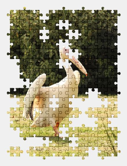 free jigsaw puzzle online pelikan,bird,zoo,nature