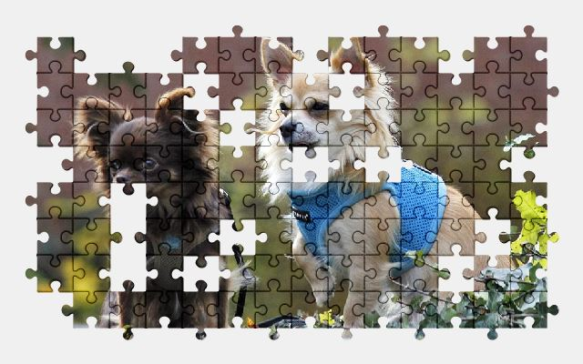free jigsaw puzzle online pet,friends,nature,dog,chihuahua,animal