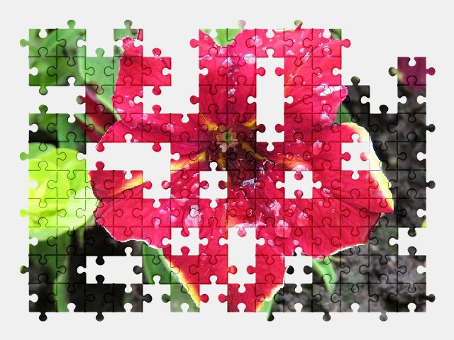 free jigsaw puzzle online red,flower,garden,plant,nature