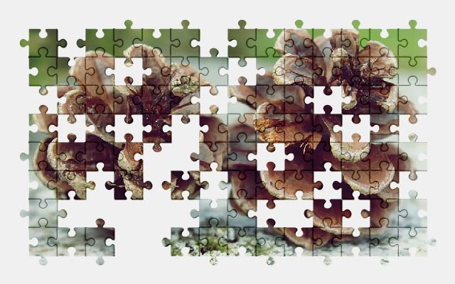 free jigsaw puzzle online nature