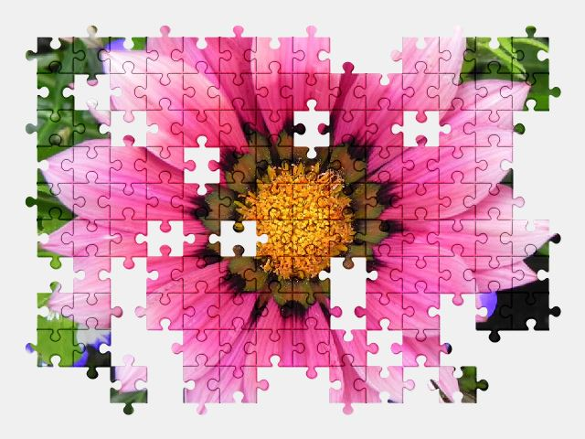 free jigsaw puzzle online pink,flower,plant,spring