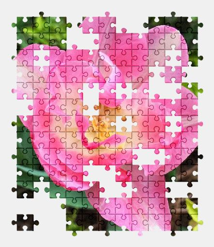 free jigsaw puzzle online pink,garden,nature,flower,pink-flowers,blossom