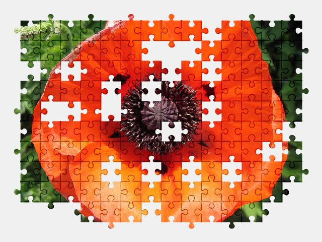 free jigsaw puzzle online poppy,blossom,bloom,summer,flower,nature