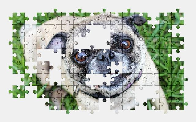 free jigsaw puzzle online puppy,animal,dog,pet,cute,funny
