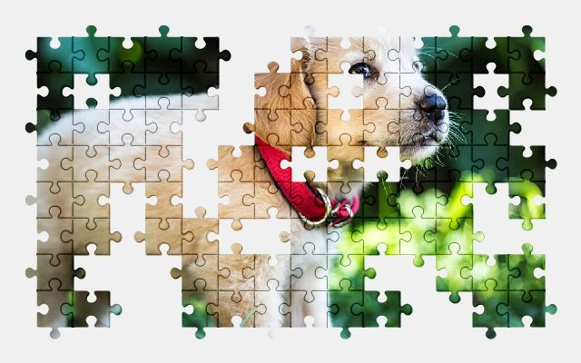 free jigsaw puzzle online puppy,dog,cute,animal,pet