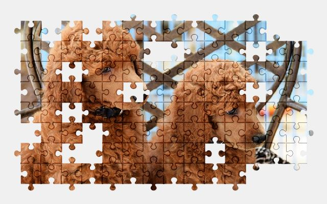 free jigsaw puzzle online puppy,poodle,dog,pet,animal