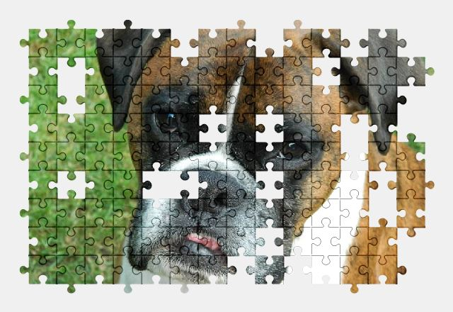 free jigsaw puzzle online puppy,dog,pet,animal,cute