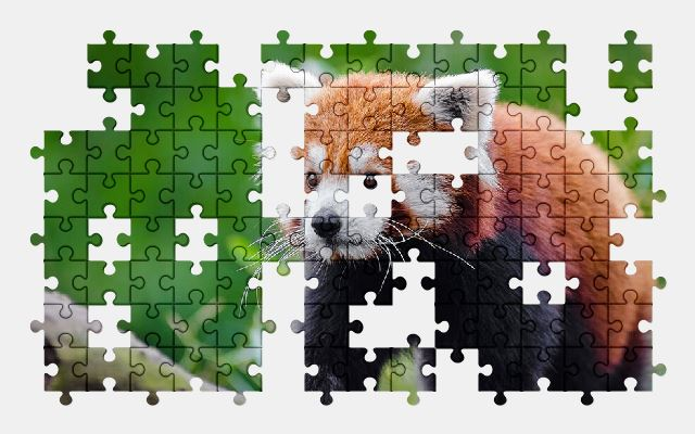 free jigsaw puzzle online red-panda,adorable,animal