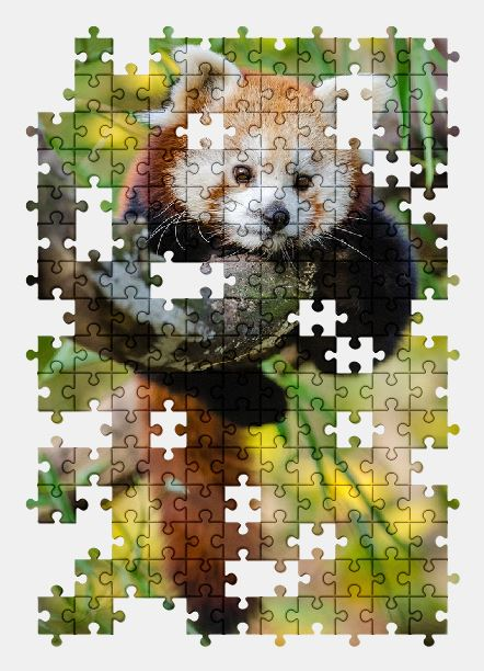 free jigsaw puzzle online red-panda,adorable,animal,branch,cute