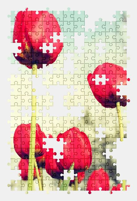 free jigsaw puzzle online red,tulips,field,flowers,plant,flower,nature,tulip