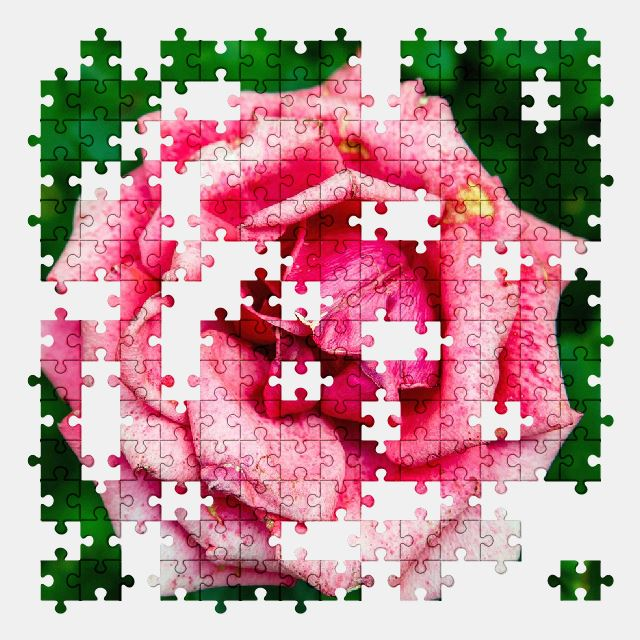 free jigsaw puzzle online rose,flower,flora,pink,nature
