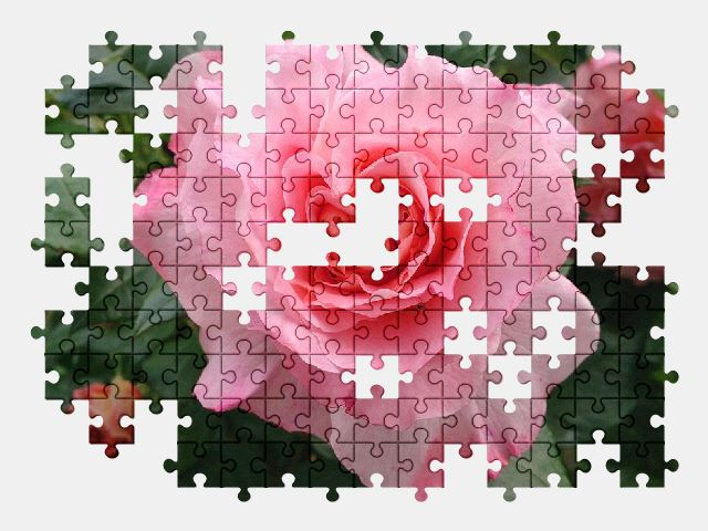 free jigsaw puzzle online rose,garden,summer,flowers,nature