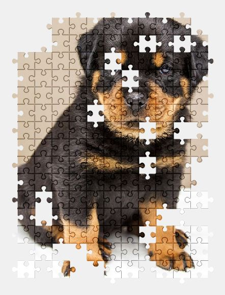 free jigsaw puzzle online rottweiler,puppy,dog,animal,cute,adorable,pet