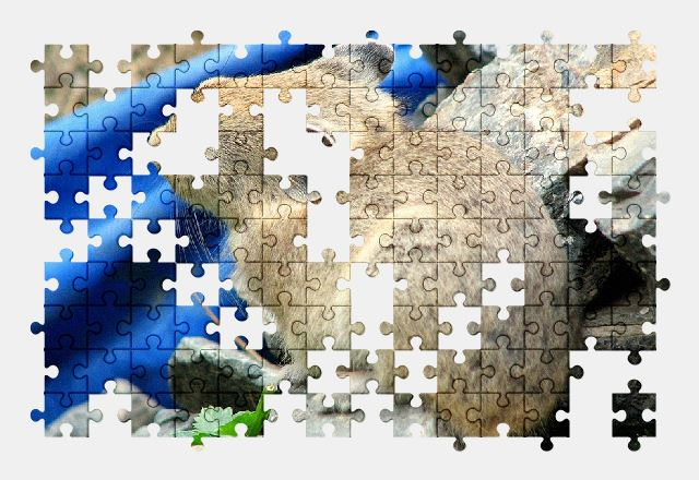 free jigsaw puzzle online animal,nature