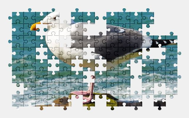 free jigsaw puzzle online seagull,bird,blue,wild,wildlife,animal,nature