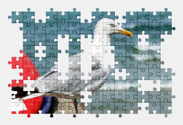 free jigsaw puzzle online seagull,bird,animal,nature,sea,water