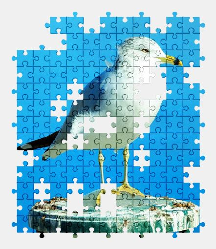 free jigsaw puzzle online seagull,bird,nature,sky