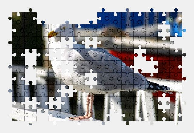 free jigsaw puzzle online seagull,bird,port