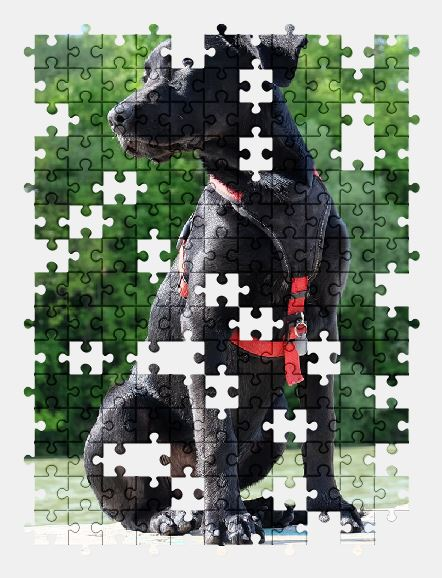 free jigsaw puzzle online dog,labrador,puppy,animal