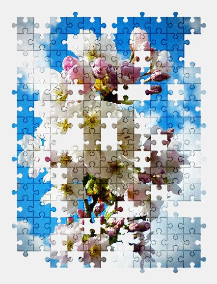 free jigsaw puzzle online sky,cherry,blossom,nature