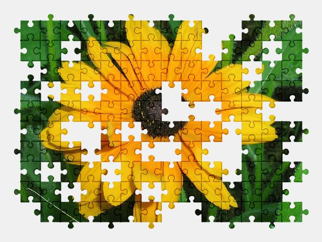 free jigsaw puzzle online yellow,flower,nature,plant