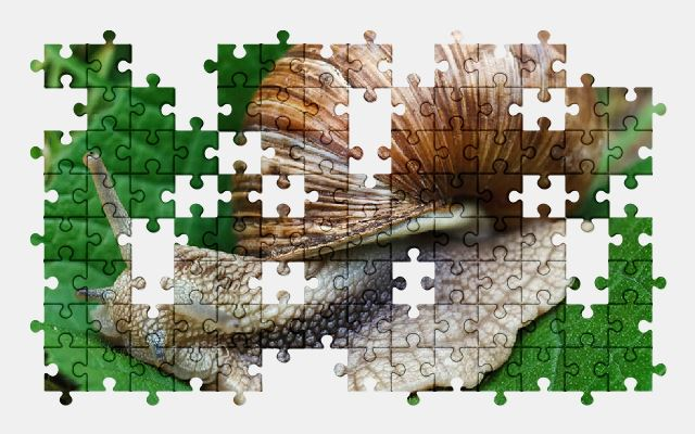 free jigsaw puzzle online snail,nature,plant