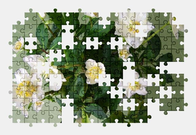free jigsaw puzzle online flower,plant