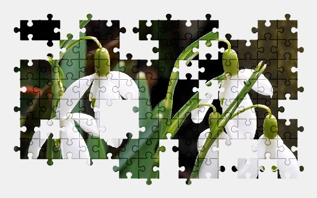 free jigsaw puzzle online white,spring,flower,nature,flowers