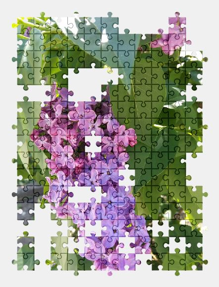free jigsaw puzzle online spring,lilac,flower,garden,nature