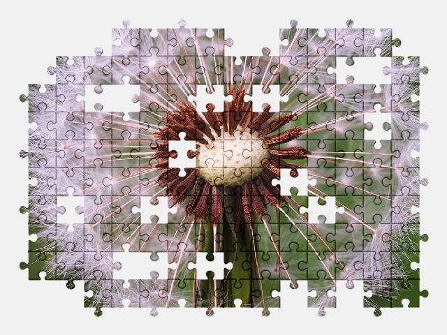 free jigsaw puzzle online summer,dandelion,green,nature,flower