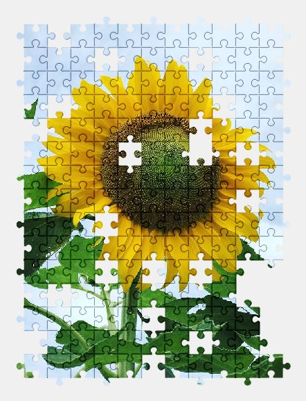 free jigsaw puzzle online sunflower,flower,nature,summer