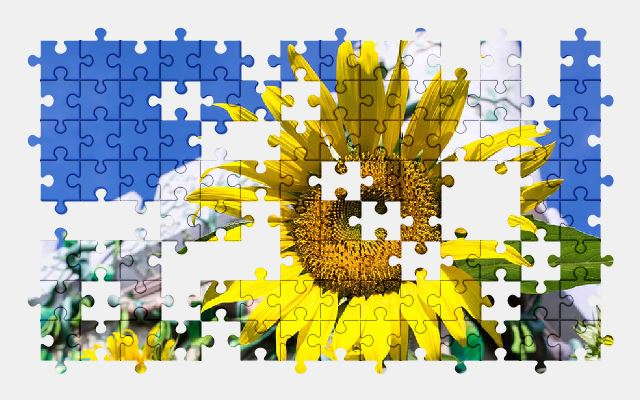 free jigsaw puzzle online sunflower,flower,yellow,sky,summer,nature